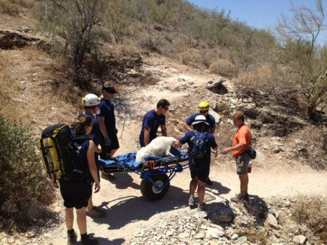 Firefighters Rescue Dog in Distress on Hike
