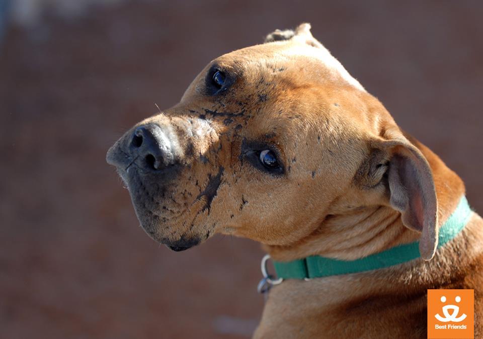 Vicktory Dog Lucas Passes Away