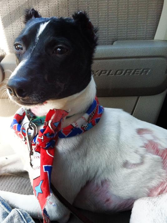 Phoenix Finds Forever Home with Foster Mom