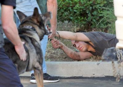 Retiring Police Dog Helps Capture Man on Most Wanted List