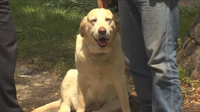 Dog Saves Owner's Life from Fire