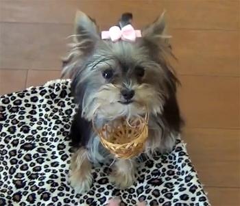 The Saturday Pet Blogger Hop: World's Smartest Puppy
