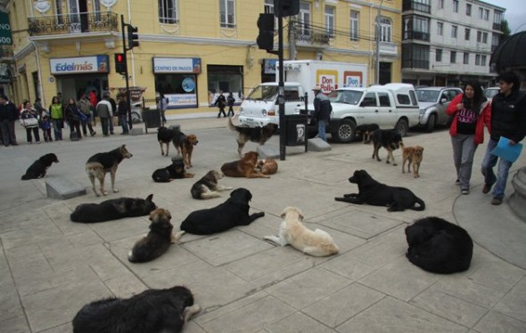 130702-street-dogs
