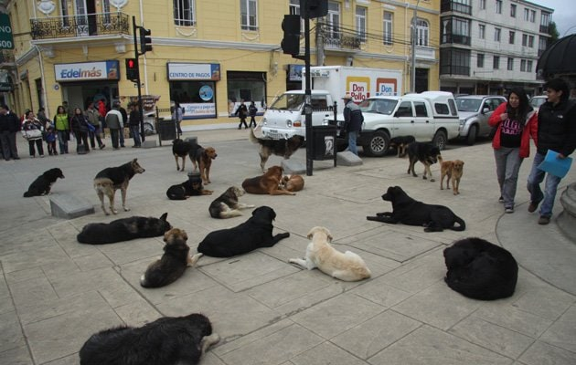 Argentina's Street Dogs Become Unlikely Crime Stoppers