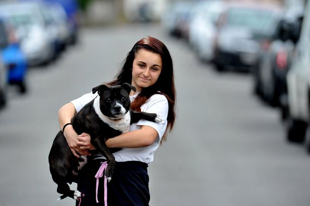 Courageous Dog Saves British Teenage Girl from Attack
