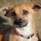 Alexis  Photo Credit: Kansas Humane Society