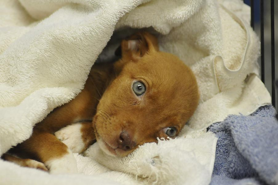 Three Dogs Rescued After Niagara Falls Residents Report Animal Cruelty Case to Police