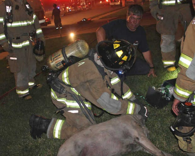 Firefighters Revive Yellow Lab Saved from Southern Illinois House Fire