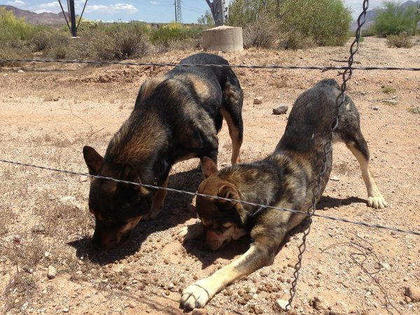 Dogs Dumped in Desert Get Rescued