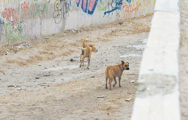 Stray Dogs Rescued from Water Canal