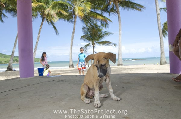 Saving Dumped Dogs on Dead Dog Beach