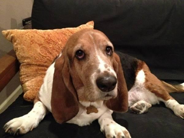 Family Pet Escapes after Burglar Leaves Door Open