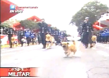 Street Dog Joins Parade and Gets Cruelly Pulled Out