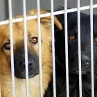 7.10.13 - 130 Death Row Puppies7