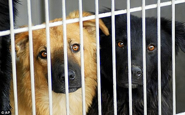 130 Dogs Must Be Rescued to Avoid Euthanasia