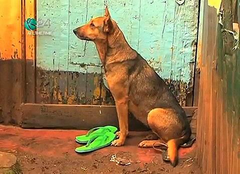 7.10.13 - Dog Adopts Kids