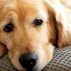 7.11.13 - Comfort Dog in Court1