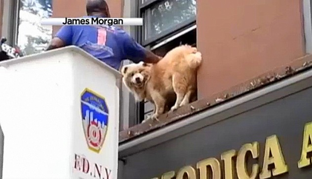 Fireman Rescues Dog Trapped on Window Ledge