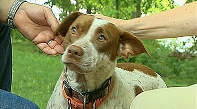 Foster Dog Runs for Help to Save Collapsed Man
