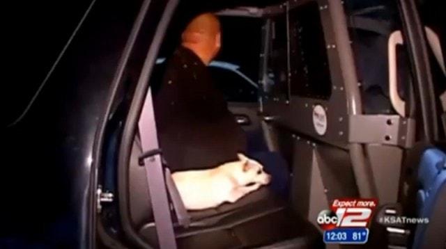 Burglar's Dog Gives Away Hiding Place