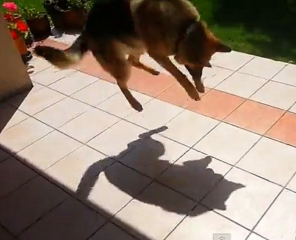 Dog Stomps on Shadow