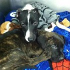 Puppy Burner Given Maximum Sentence