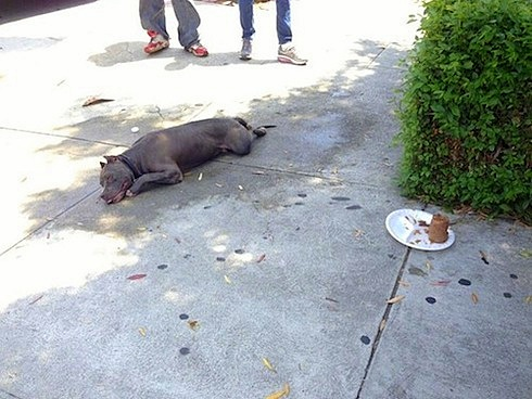 Police Save Severely Ill Pit Bull Dumped by Drunk Driver