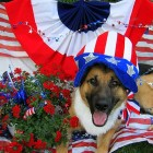 Tips for Handling 4th of July with Dogs