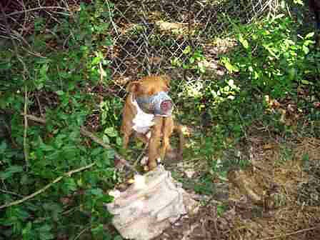 7.4.13 - Duct Taped Bait Dog Rescued1