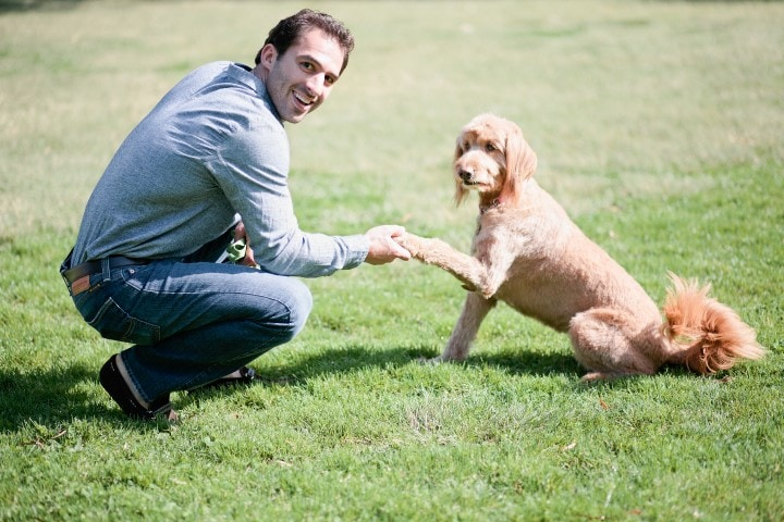 DogVacay CEO Aaron Hirschhorn Discusses Results of the State of US Pet Travel Survey