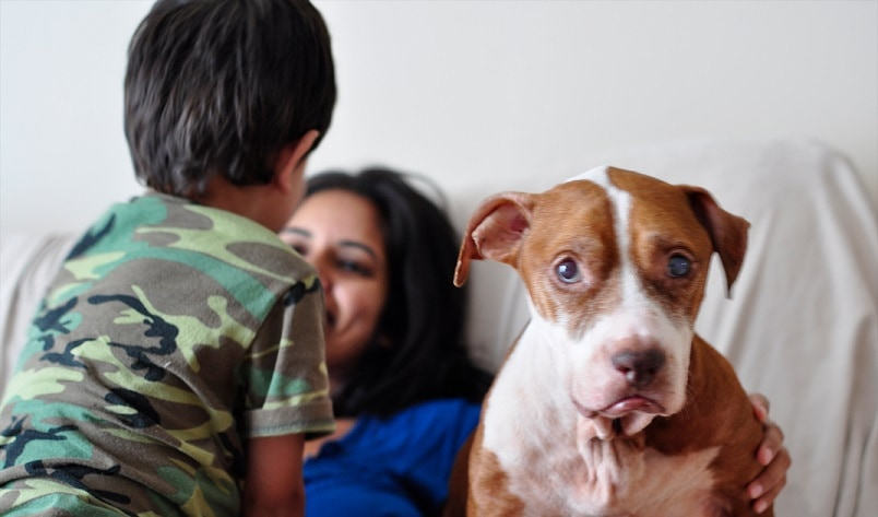 Yukon and Neyya: How Two Rescued Pit Bulls Have Impacted a Family Forever