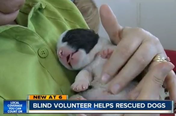 Blind volunteer helps rescued dogs
