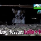Dog Rescue: Pregnant dog Lollie abandoned on the streets