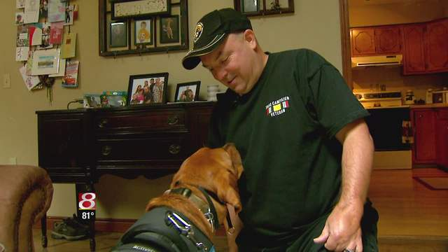Veteran's Service Dog Helps Him Get His Life Back
