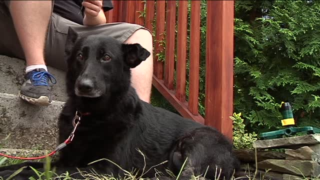 Dog Saves Family from Early Morning House Fire