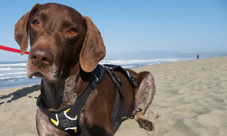 UC Davis Veterinary Hospital Helps Blind Rescue Dog See