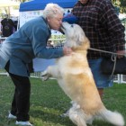 Beloved Therapy Dog Passes