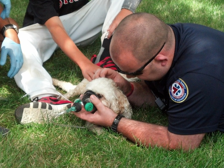 Indianapolis Fire Department Honored for their Commitment to Saving Animals