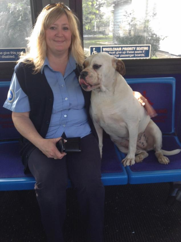 Owner of Lost Dog that Boarded Staten Island Bus Found
