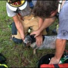 Firefighters Save Unconscious Dog from Fire