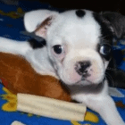 Puppy Beats the Odds and Learns to Walk