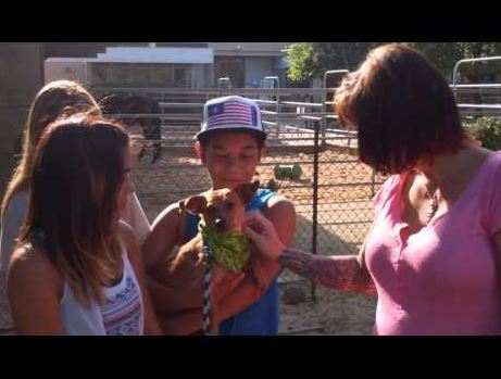 Kidnapped Chihuahua is Reunited with His Family