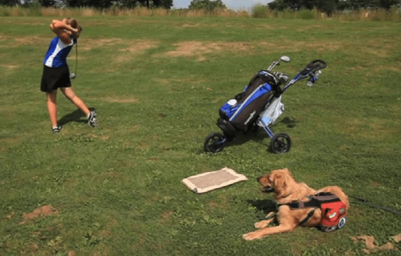 Diabetic Alert Dog Helps Teenager on the Golf Course