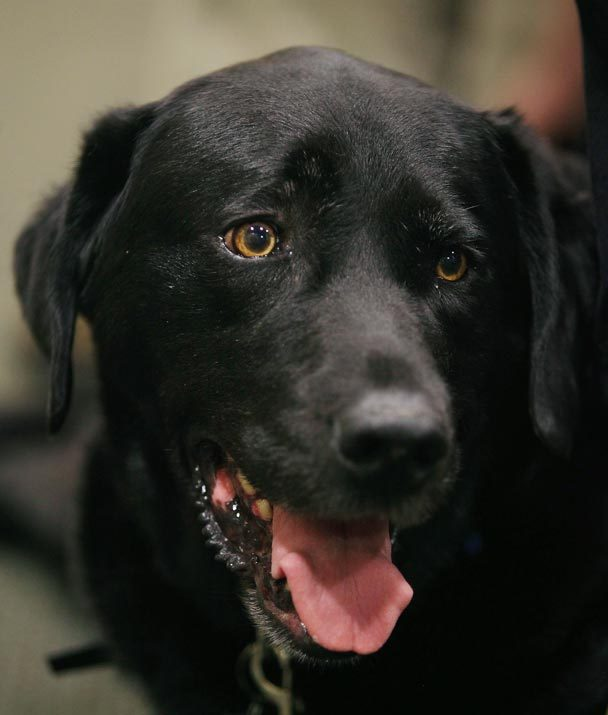Courthouse Dog Retires after Seven Years of Helping Victims