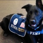Rescued to Rescuer – Logan the FEMA Dog
