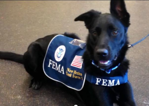 Rescued To Rescuer Logan The Fema Dog Life With Dogs