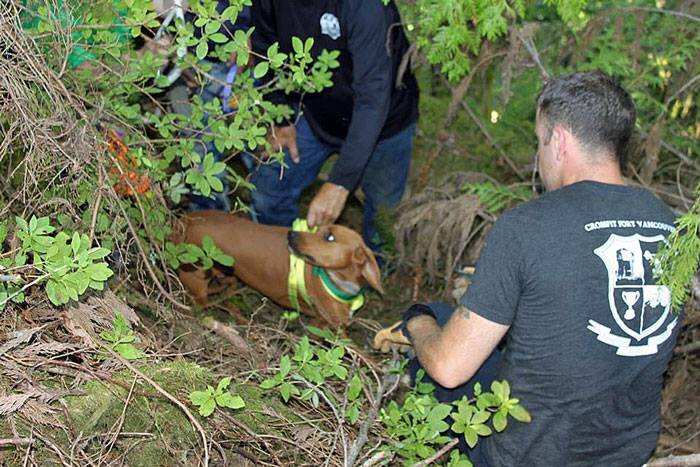 Volunteers Rescue Dog from Ravine