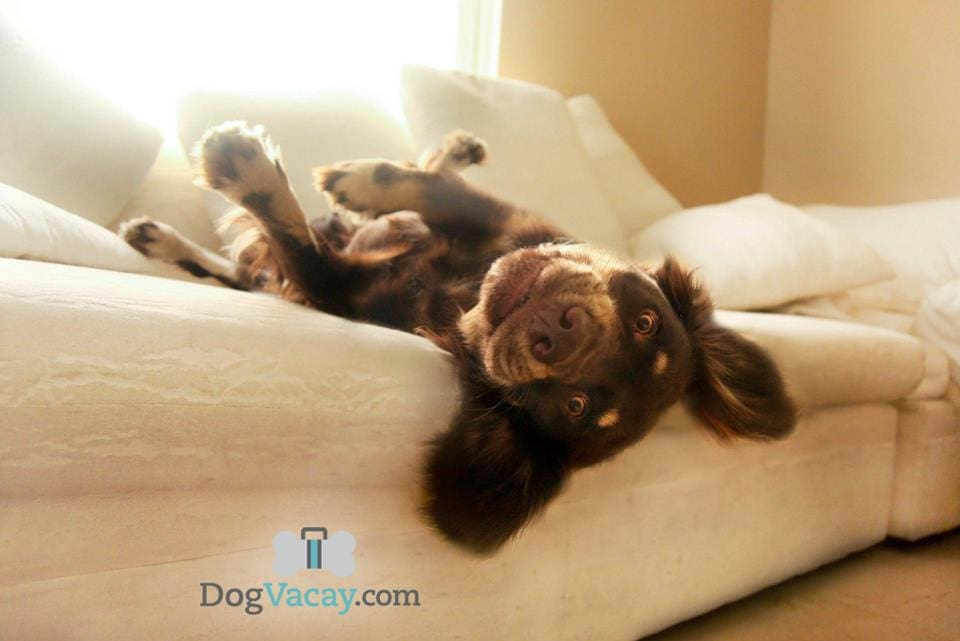 Book Your Pup a DogVacay When You Travel