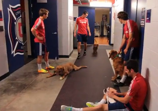 Soccer Goes to the Dogs