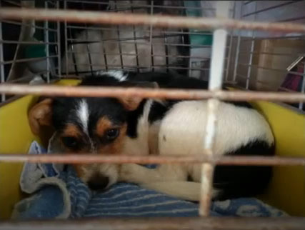 Australia – 109 Dogs Rescued from Puppy Farm, More Await Rescue